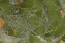 tagliatelle verdi e trecce 022